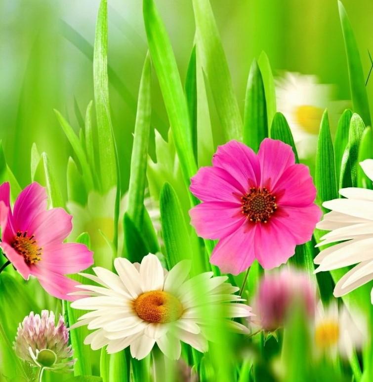 Spring-cropped.jpg